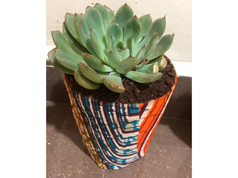 Cactus in Recycled Bottles